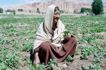 afghanistan-daryani trabajadora del campo